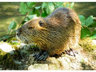 How To Identify If You Have A Groundhog
