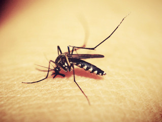 Pesky Mosquito: How Can You Save Yourself
