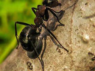 Ants, Go Away