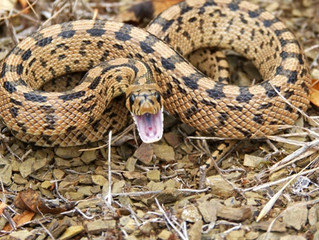Helpful Tips For Encountering A Snake