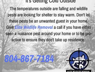 Nuisance Pest: Cold Temperatures