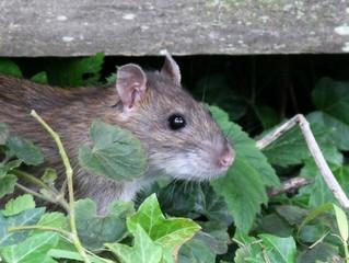 Mice Don't Make Good Room Mates