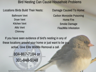 Bird Nesting Can Cause Household Problems