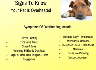 Signs To Know If Your Pet Is Overheated