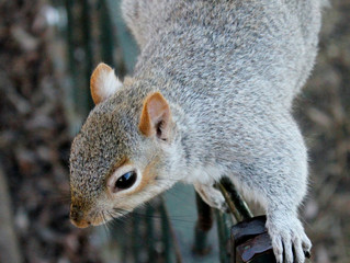 How Much Damage Can Squirrels Cause