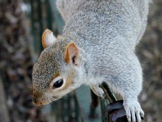 Squirrels Invasion