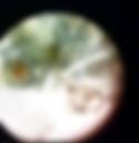 Screen Shot 2018-01-04 at 4.38.43 PM.png