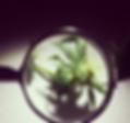Screen Shot 2018-01-05 at 12.45.27 PM.pn