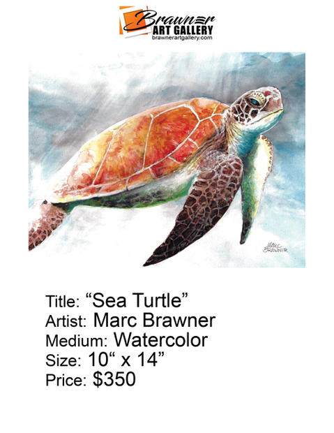 Sea-Turtle-email.jpg