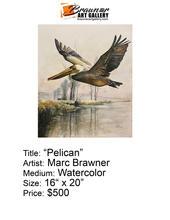 Pelican-email.jpg