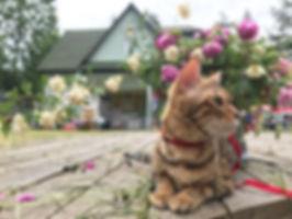 Музей кошки Всеволожск