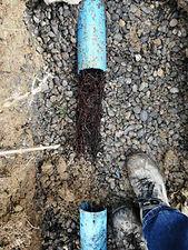 canalisation bouchée et bloquée par des racines