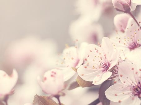 Innerer Frühjahrsputz ~ In-sich-kehren