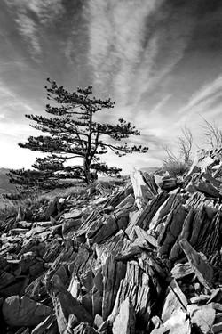 rock 'n' trees