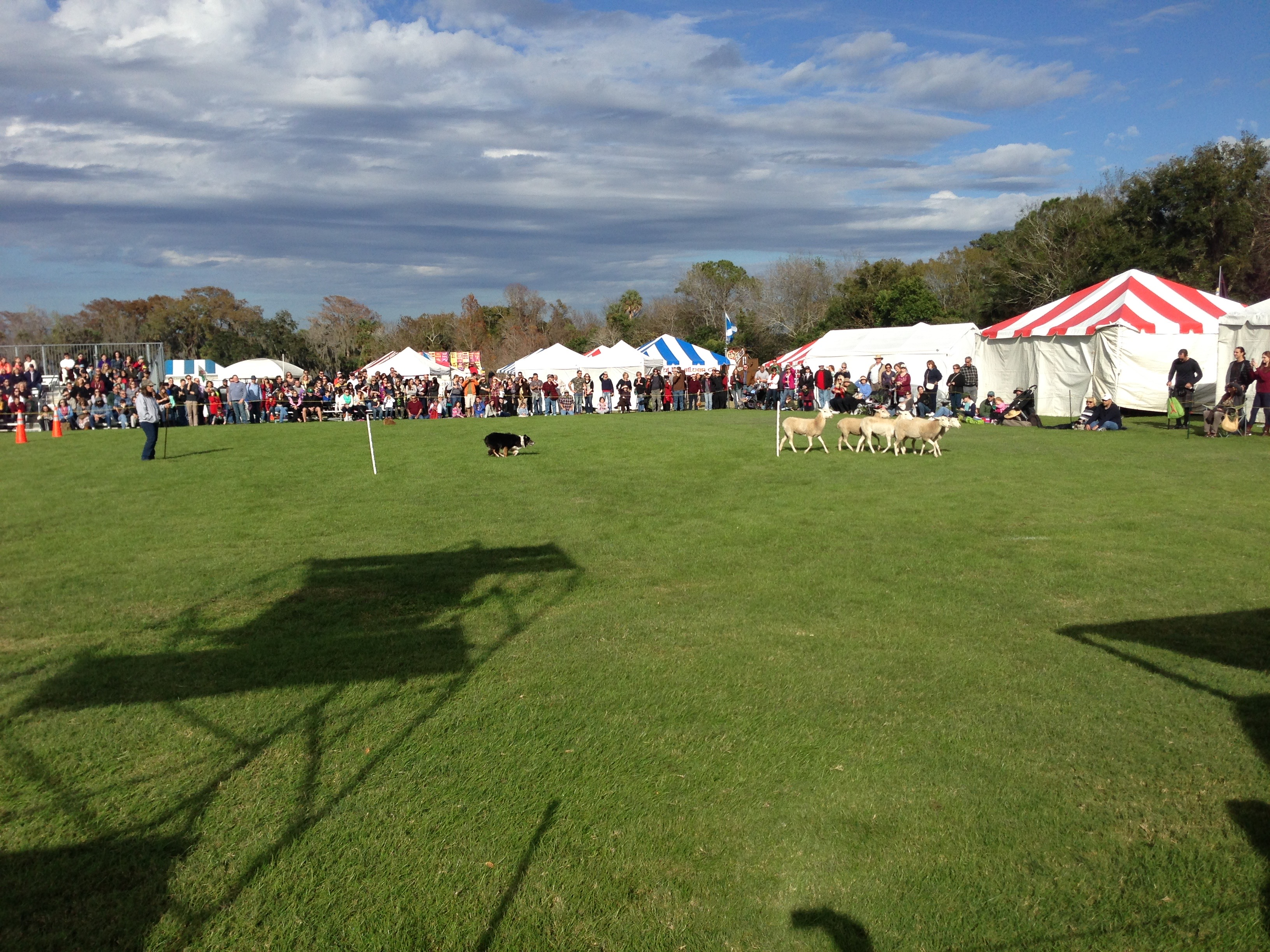 Sheep Dog display!