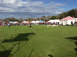 Sheep Dog display!