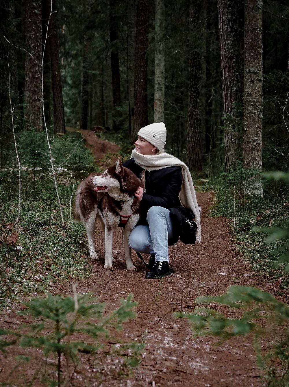 Siberian Husky sledding Riga Latvia