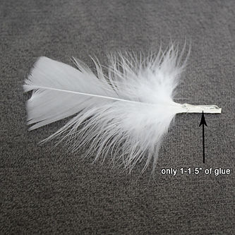 Feathers 7-7115.jpg