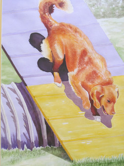 Agility Toller