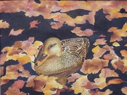 Woodland Duck