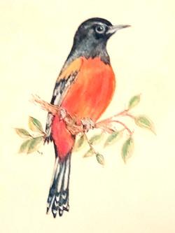 Proud Robin