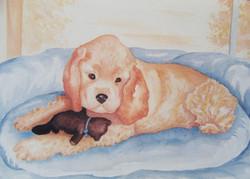 Puppy's Toy