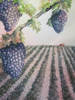 Summer grapes