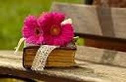 פרח ושמו סיגל