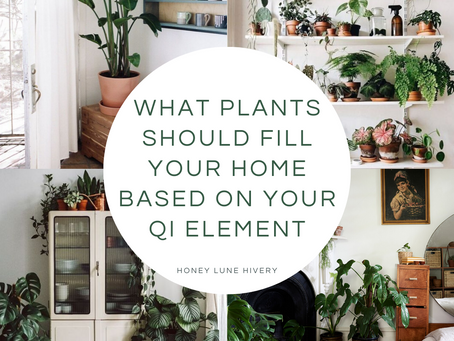 What Plants Should Fill Your Home Based on Your Qi Element