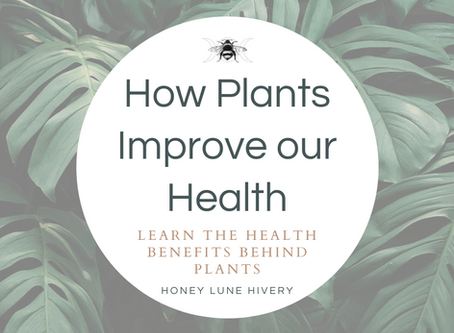 How Plants Improve our Health