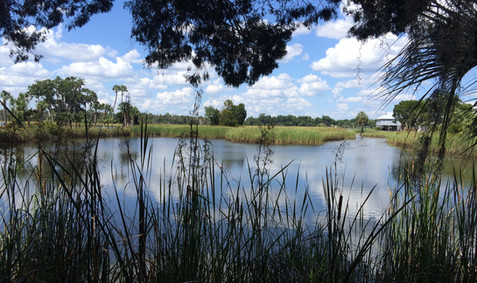 Crystal River--The GOLD of the Nature Coast