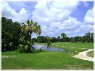 Area Golfing