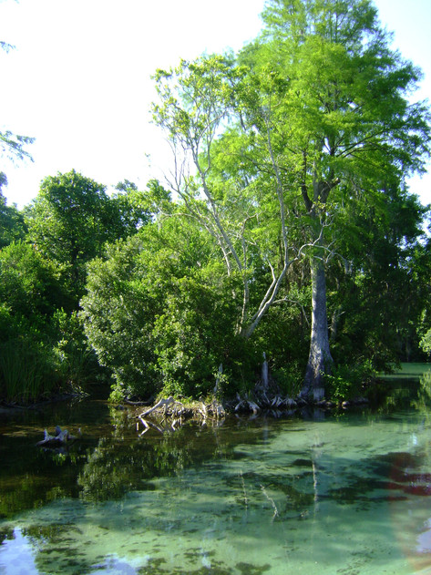 Plethora of Spring Fed Rivers