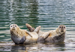 Harbor seal bookends.jpg