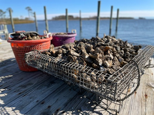 Colonial Oysters: 100-Count
