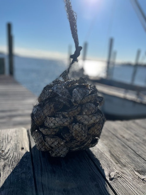 Colonial Oysters: 50-Count