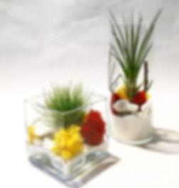 Reggaetón plants 💚 tillandsias o clavel