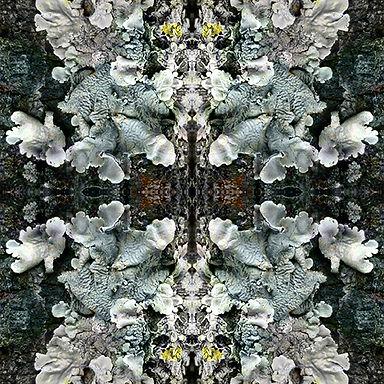 Condon-Shih Lichen Shield Still Image Video Projection 1 08 01 2021.jpg