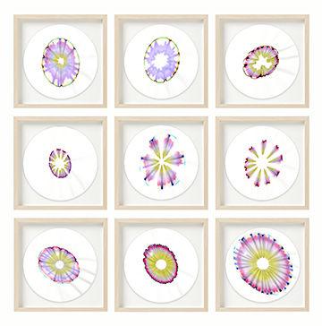 Condon-Shih Chroma Studies Framed 9.jpg