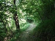 lungo il sentiero della Ricciaia Grande