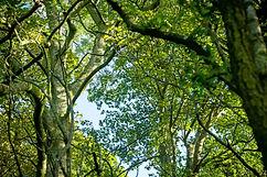 Forest%20Bathing%20September%202020-50_e