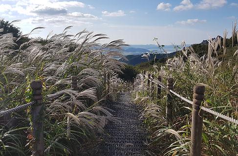 Mt. Wolchulsan National Park, Grass Field