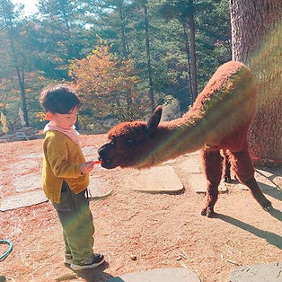 Alpaca World day tour