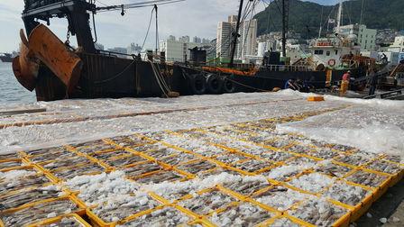 South Korea Jagalchi fish market-Busan city tour