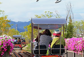 Korea private tour-Tagytravelkorea, T express wooden rollercoaster