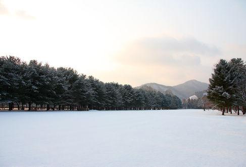 Nami Island - Seoul city Tour