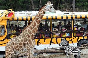 Korea private tour-Tagytravelkorea, Safari World