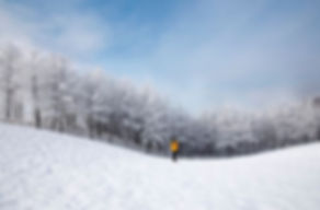 Daegwallyeong Sheep Farm in winter,tagytravelkorea 1day tour