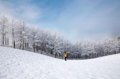 Daegwallyeong Sheep Farm in winter,tagytravelkorea 1day tour