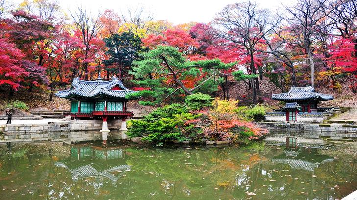 Korea private tour-Tagytravelkorea, Changdeokgung Palace and rear garden(secret garden)
